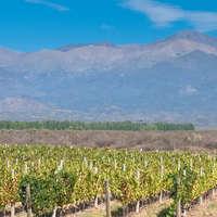 Argentinischer Wein - Highlights aus Südamerika