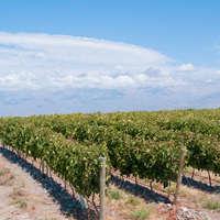 Mendoza Wein - Argentinien in Höchstform!