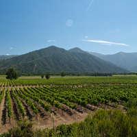 Wein aus Patagonien - Argentinien und Chile