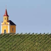 Einmaliger Wein aus Österreich