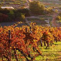 Mit diesen Wein schmecken Sie den Herbst