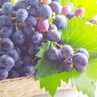 Cabernet Franc Wein