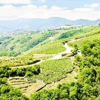 Wein von der Rhône -  die besten bei Navinum Bestellen