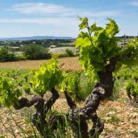 Traumhafter Wein aus Frankreich für gerade einmal 6€
