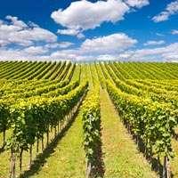 Der beste Wein aus Baden