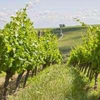 Der beste Franken Wein - zum Top Preis online bestellen!
