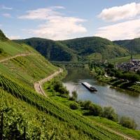 Mosel Wein - der beste Wein von der Mosel bei Navinum