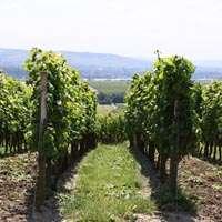 Der beste Wein aus Rheinhessen zum Top-Preis