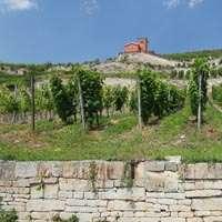 Der beste Wein aus Saale-Unstrut zum TOP Preis! Jetzt bestellen!