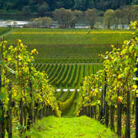 Deutscher Wein - Qualität und Genuss!