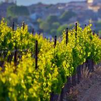 Languedoc-Roussillon - Wein aus Südfrankreich