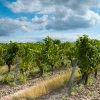 Der beste Wein von der Loire