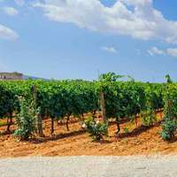 Tollen Wein aus Mallorca bei Navinum bestellen