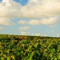 Médoc-Wein - der beste Wein aus dem Médoc bei Navinum