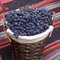 Wein der Rebsorte Monastrell aus Spanien und Frankreich
