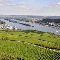 Der beste Wein aus dem Rheingau - bei uns online bestellen!
