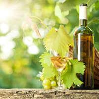 Scheurebe-Wein: Geschmack kombiniert mit Geschichte. Prost!