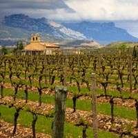 Leckerer Rioja-Wein