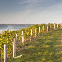 Alkoholfreier Wein - Wein & Sekt bewusst genießen