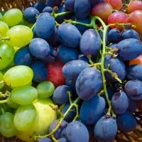 Cuvée-Wein jetzt entdecken