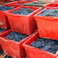 Exklusiven Barolo Wein aus Italien online kaufen