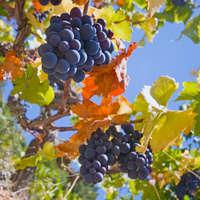 Der beste Malbec-Wein - jetzt bei NAVINUM online kaufen