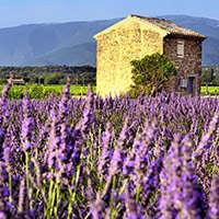 Der beste Wein aus der Provence - online bei Navinum
