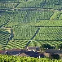 Wein aus dem Burgund - die besten bei NAVINUM!