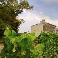 Wein aus Bordeaux - die besten über Navinum bestellen!