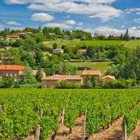 Wein aus dem Beaujolais - zum Bestpreis bestellen