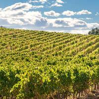 Wein aus Katalonien