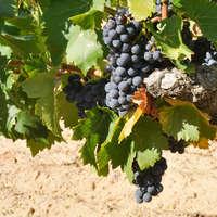 Die besten Tempranillo-Weine