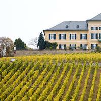 Bestellen Sie VDP-Weine aus Deutschland